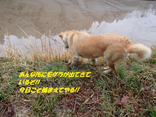 P4010441_convert_20150404132824.jpg