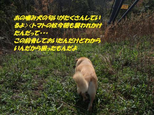 P4020469_convert_20150403132231.jpg