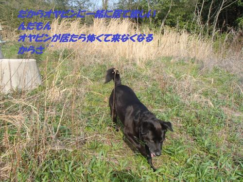 P4020470_convert_20150403132252.jpg