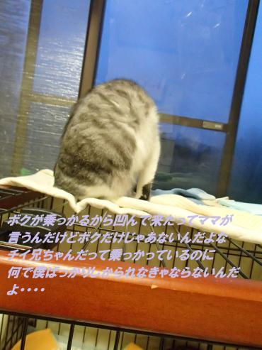 P4040475_convert_20150404132748.jpg