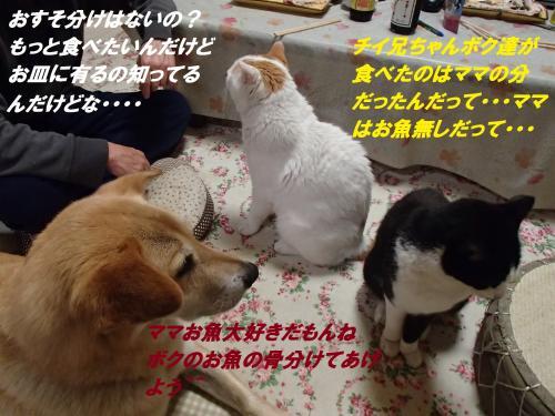 P4040531_convert_20150407120532.jpg