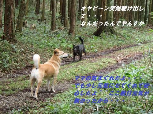 P4070552_convert_20150408123643.jpg