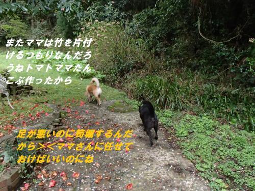 P4070553_convert_20150408123701.jpg