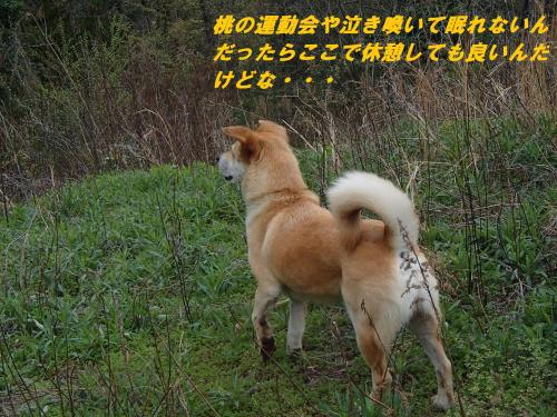P4070564_convert_20150408123806.jpg