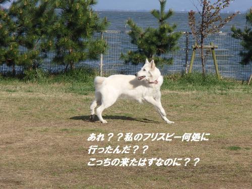P4080578_convert_20150409102512.jpg