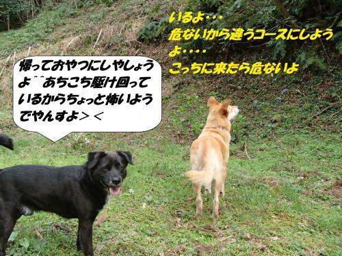 P4090595_convert_20150415123229.jpg