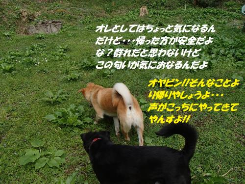 P4090596_convert_20150415123245.jpg