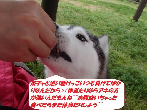 P4160706_convert_20150417104410.jpg