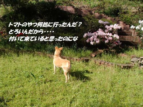 P4170713_convert_20150418131106.jpg