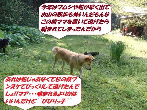 P4170715_convert_20150418131140.jpg