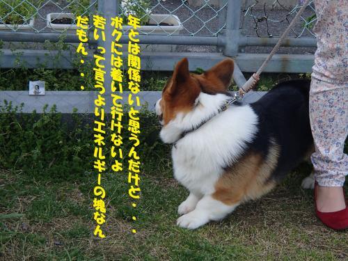P4170727_convert_20150419132445.jpg