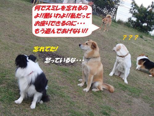 P4170744_convert_20150419132623.jpg