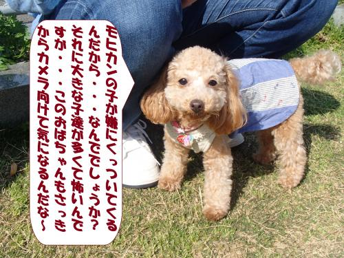 P4180746_convert_20150420134816.jpg