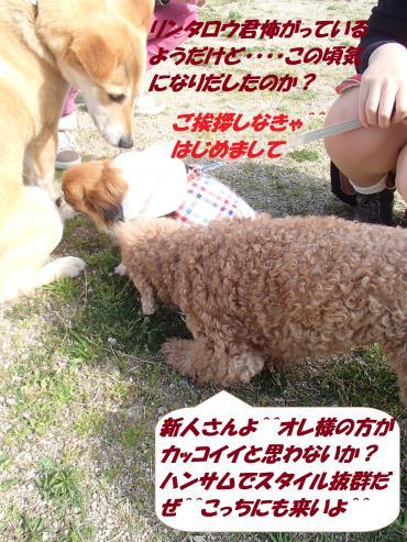 P4180747_convert_20150420134717.jpg