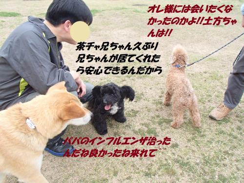 P4180768_convert_20150420134941.jpg