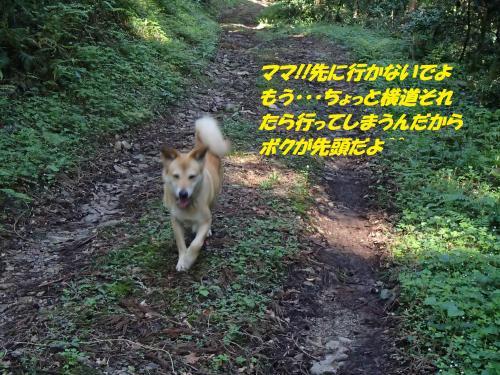 P4220791_convert_20150426124857.jpg
