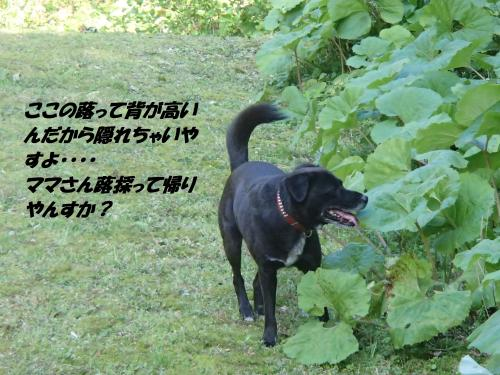 P4220796_convert_20150426124927.jpg