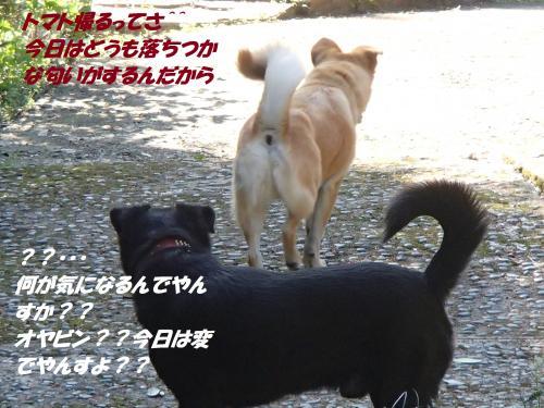 P4220805_convert_20150426125017.jpg