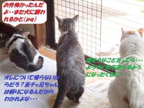 P4230809_convert_20150423132153.jpg