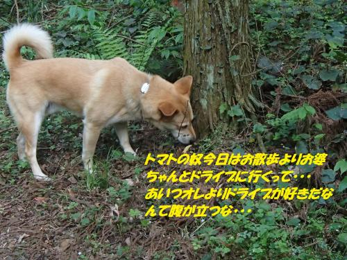 P4240819_convert_20150425132414.jpg