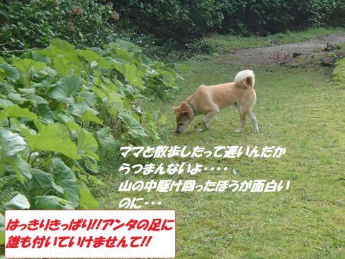 P4240820_convert_20150425135639.jpg