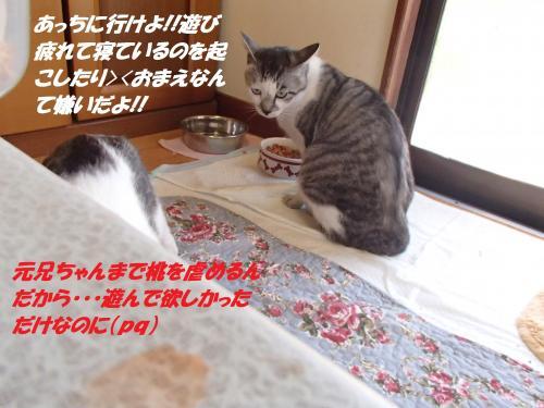 P4270900_convert_20150428100536.jpg