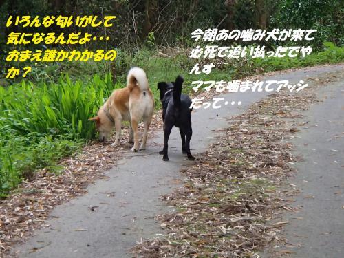 P4280905_convert_20150429095433.jpg