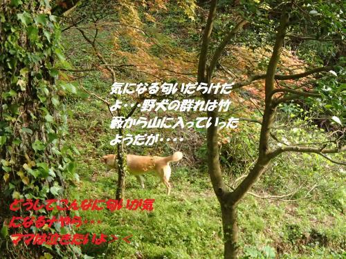 P4280916_convert_20150429095517.jpg