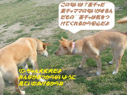 P4290948_convert_20150430131643.jpg