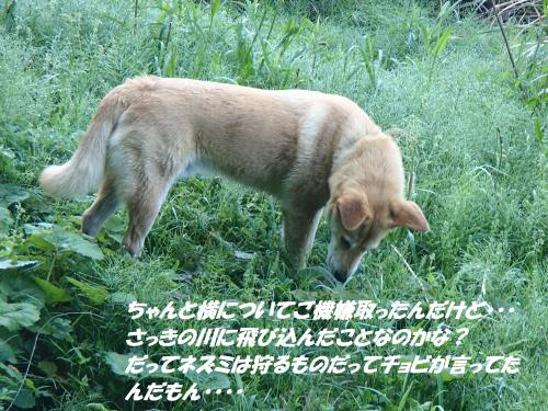 P4300979_convert_20150503122009.jpg