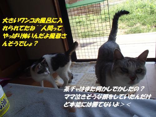 P4300980_convert_20150503122024.jpg
