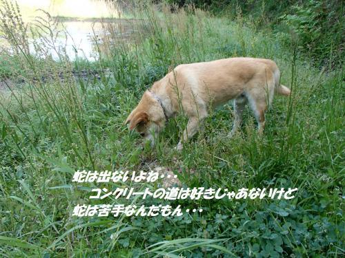 P5010992_convert_20150501102340.jpg