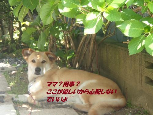 P5010996_convert_20150501102505.jpg