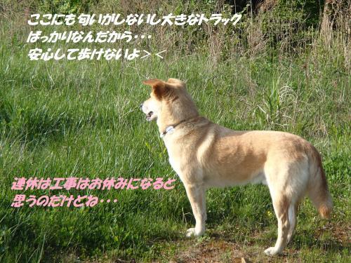 P5011001_convert_20150503122135.jpg