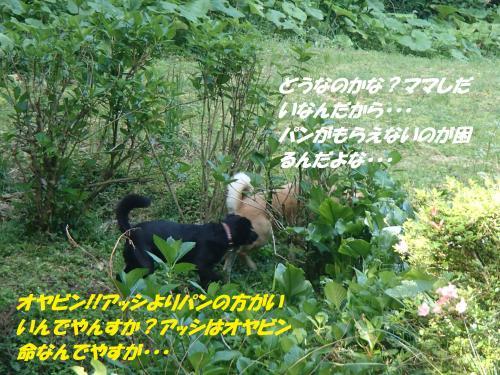 P5021010_convert_20150509135717.jpg