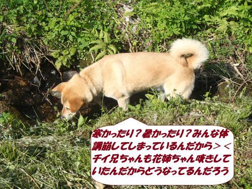 P5021014_convert_20150509135753.jpg