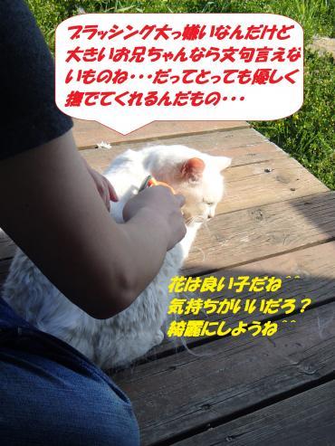 P5021021_convert_20150504131308.jpg