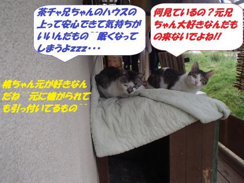 P5031028_convert_20150504131324.jpg