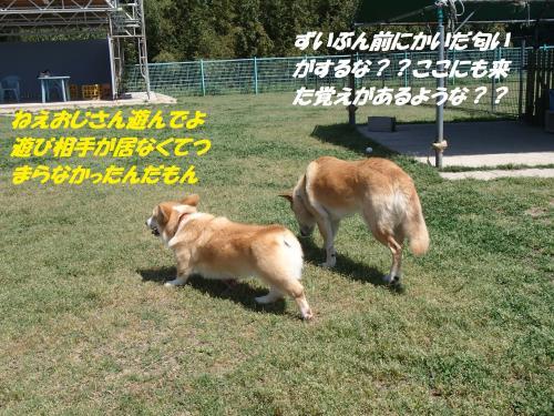 P5051039_convert_20150506134658.jpg