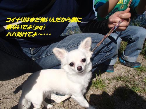 P5051052_convert_20150506134903.jpg