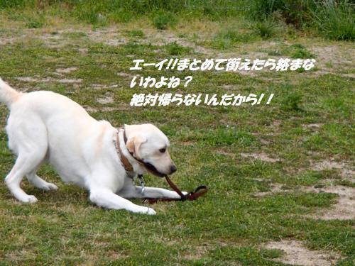 P5061077_convert_20150507101334.jpg