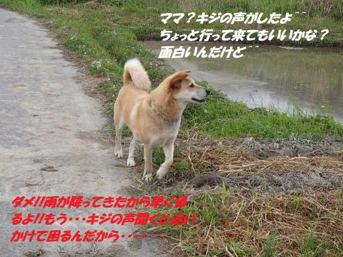 P5121155_convert_20150513100219.jpg