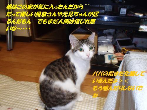 P5121161_convert_20150513100438.jpg