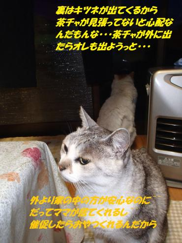P5121163_convert_20150513100159.jpg