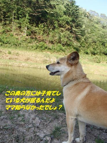 P5131181_convert_20150514091923.jpg