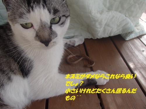 P5141185_convert_20150514092139.jpg