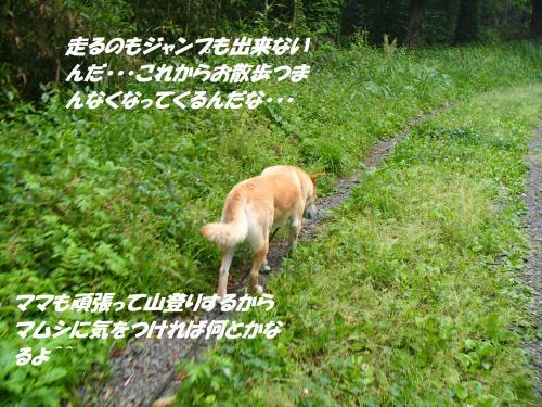 P5161223_convert_20150516125813.jpg