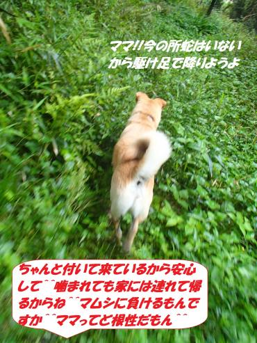 P5161224_convert_20150516125613.jpg