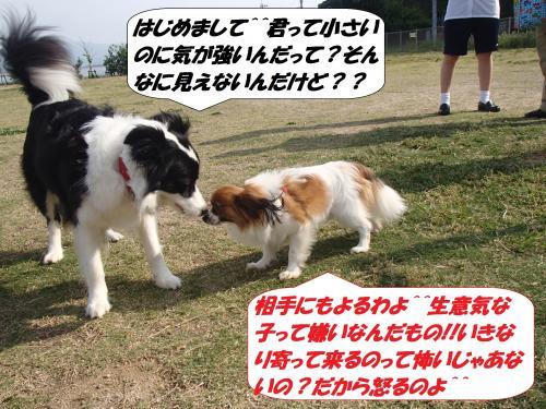 P5161231_convert_20150518091948.jpg