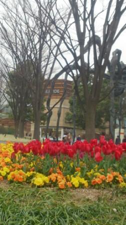 六本木ヒルズの花壇